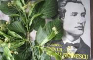 """In orasul lui Eminescu, inspiratia e floare rara. Prea multi bani pentru prea multa tacere la Fundaţia """"Iasi Capitala Culturala Europeana"""""""