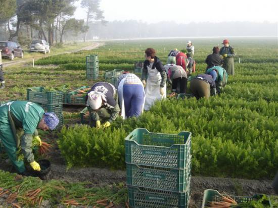 S-a deschis campania de munca sezoniera in Spania. Vezi oferta locurilor de muncă în agricultură si cat se castiga