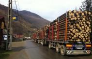 Zeci de penali din mafia lemnului au fost prinsi cu licitatii trucate. Amenzi de 26,6 milioane euro, prejudiciu nerecuperat