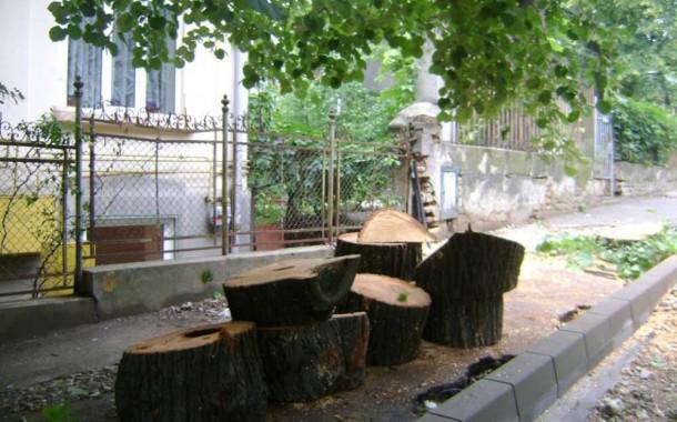 O noua campanie de taiere a copacilor din Copou. Drujbarii Primariei vor taia 89 de copaci si vor toaleta alti 43
