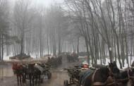 Hoti de lemne din judetul Iasi, prinsi cu peste o tona de lemn furat, scapati de politisti doar cu amenzi