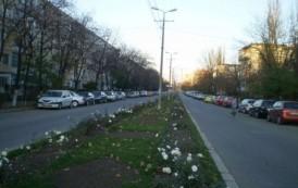 Lucrări de asfaltare pe bd. Dimitrie Cantemir și str. Zimbrului