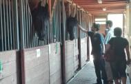 DRAMĂ: Caii Poliției Locale se îmbolnăvesc pentru că stau prea mult în grajd