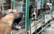 """Afacere banoasa din adopțiile cu maidanezi. Acuzatii terifiante- """"cainii sunt folositi pentru trafic de droguri"""""""