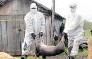 Pesta porcina a fost confirmata la Iasi. Focarul a fost localizat la Butea