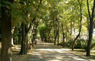 Semnal de alarma! Parcul Copou, neglijat de autorități și asediat de ciori