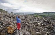 Victorii pentru pădure realizate de Agent Green în instanțele supreme. Hotărârile definitive ale Justiției, încălcate în mod repetat de autorități