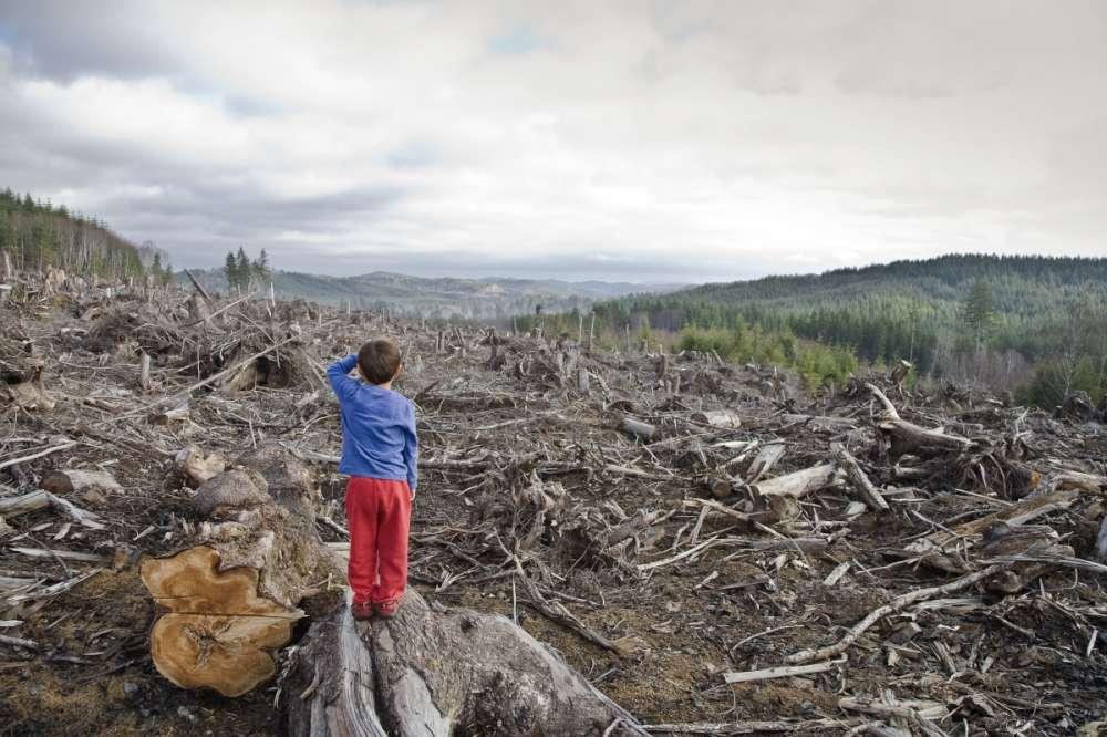 Bilantul jafului! Domnia lui Costel Alexe la Mediu: 26.000 hectare defrișate si 1,6 milioane de avize pentru transportul de lemn
