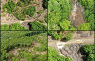 Pădurea Bârnova-Repedea ar putea fi salvată de drujbe dacă devine Arie naturală urbană protejată!
