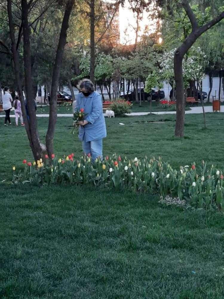 Sexagenara surprinsa la furat lalele din parcul de la Casa Sindicatelor