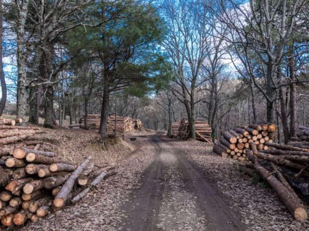 Marius Bodea (Senator USR PLUS): România știe ce să facă pentru protejarea pădurilor. Dar nu vrea!