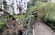 FOTO. Imagini apocaliptice la Iasi, dupa furtuna din weekend. Copaci smulsi din radacini si spatii verzi distruse